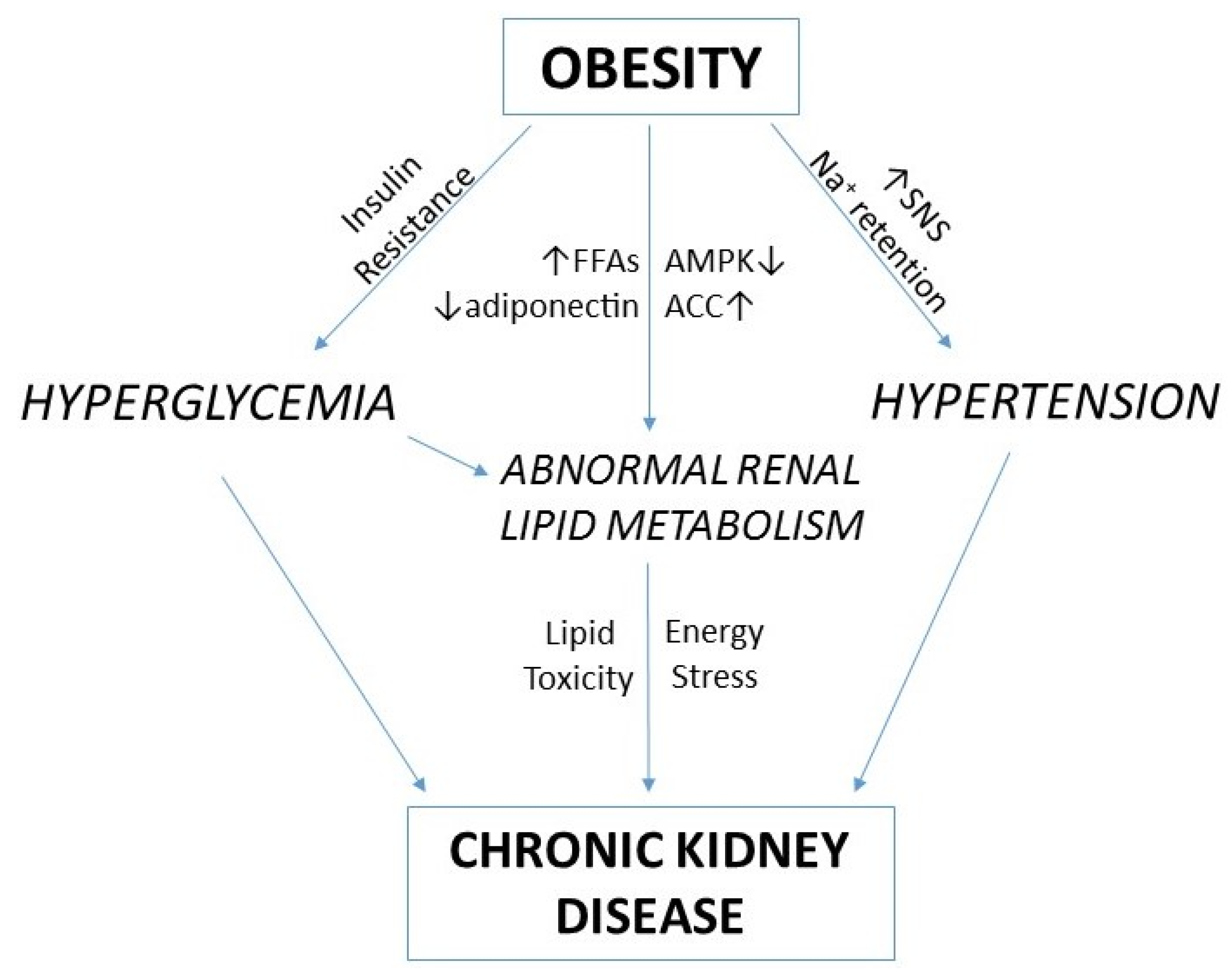 how to solve chronic renal failure