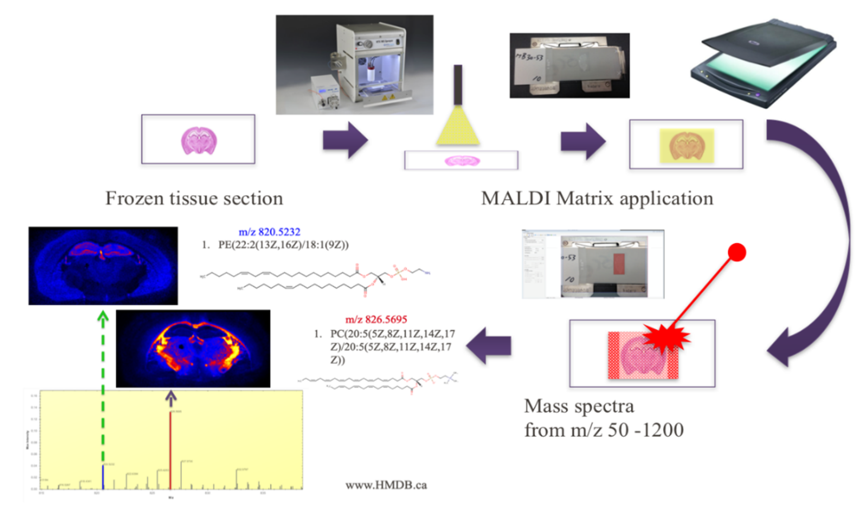 Metabolites | Free Full-Text | Imaging Mass Spectrometry: A