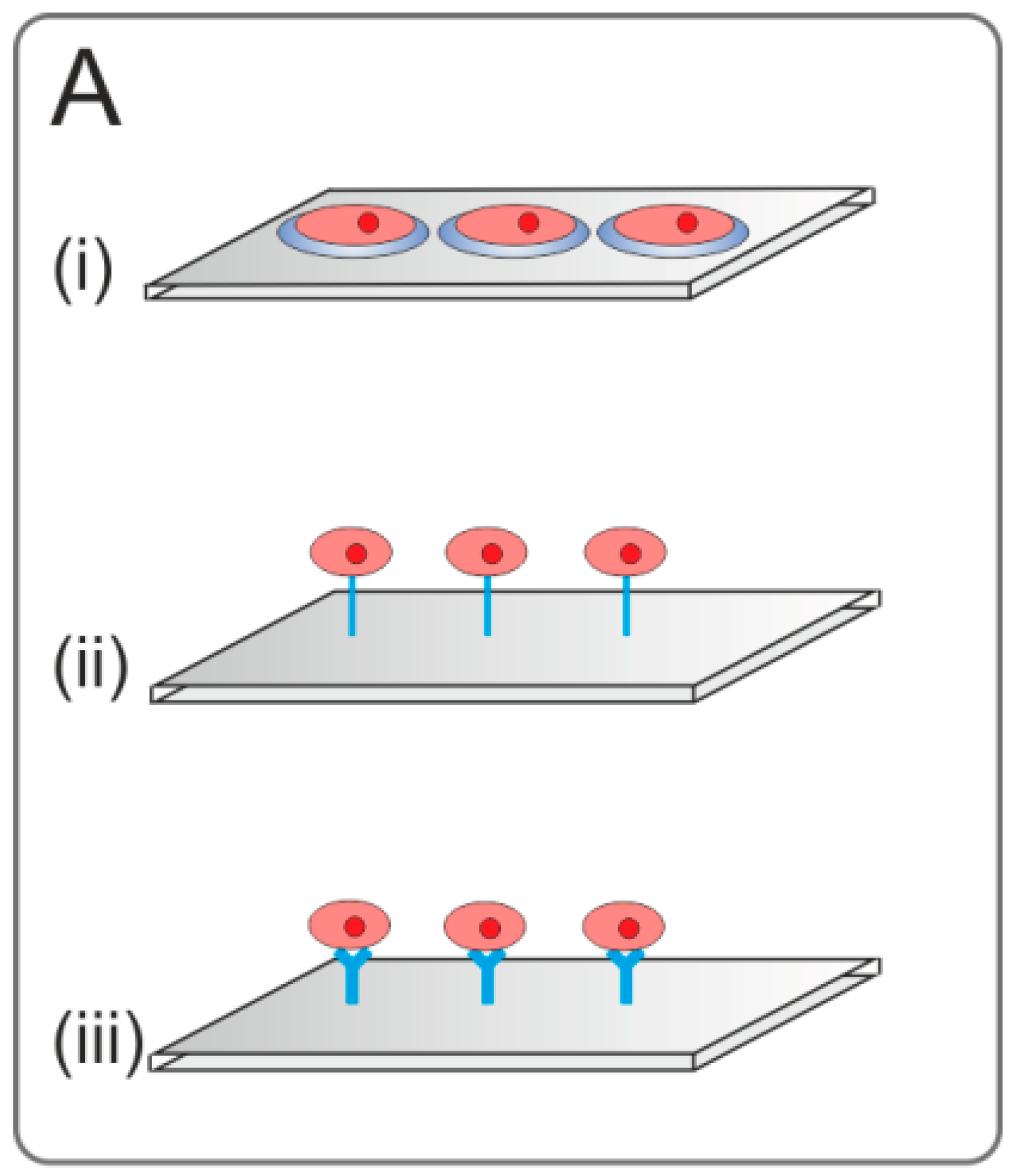 transfected cell microarrays essay Transfected cell microarrays were also embedded within three-dimensional ecm hydrogels in the three-dimensional hydrogel, the inhibition effect of sirna on cancer cell invasion was evaluated by quantifying the size of cell clusters on the microarrays.