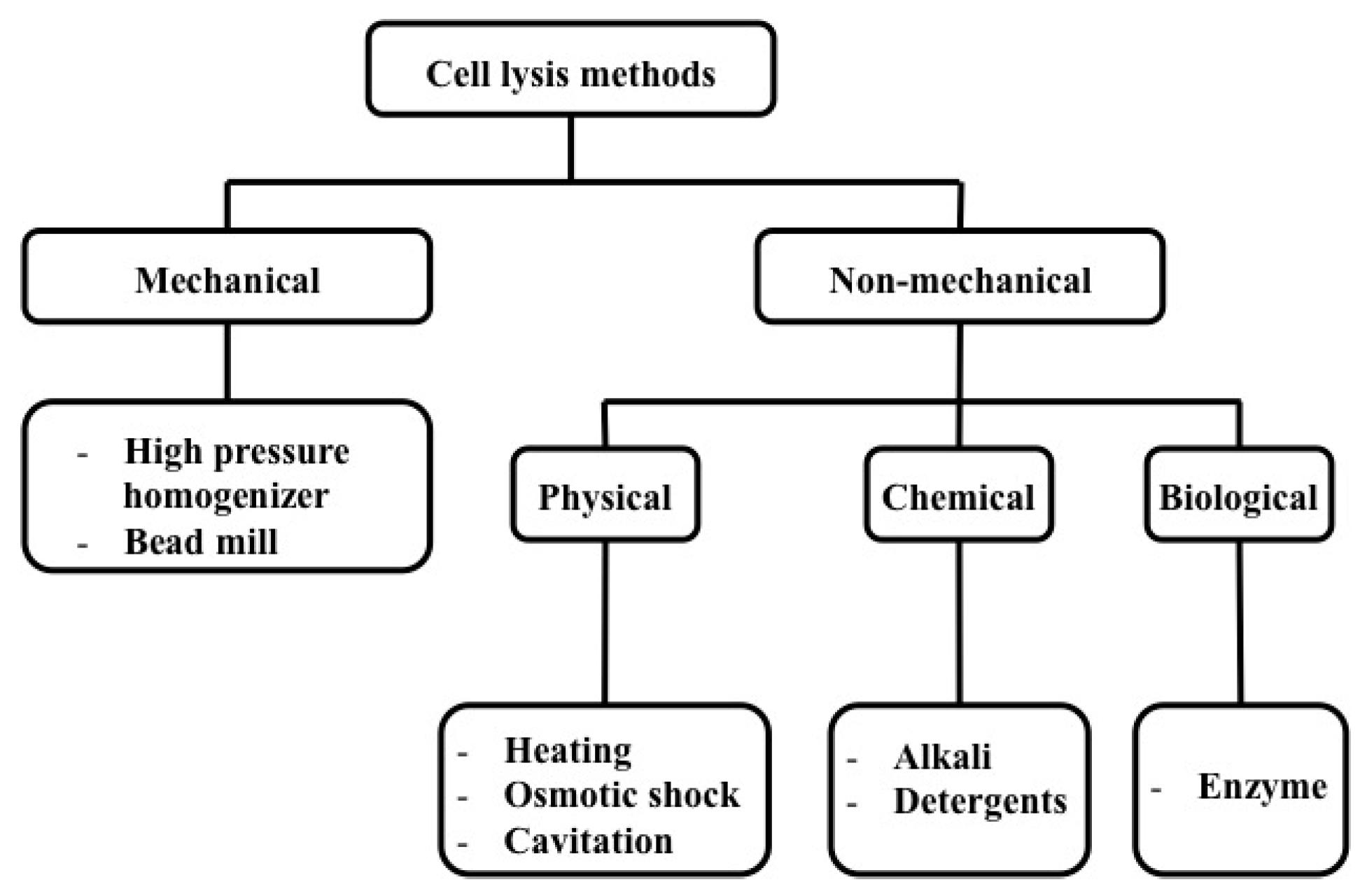 Bacterial Cell Lysis Buffer Recipe
