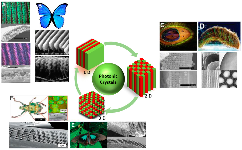 Micromachines Free Full Text Photonic Crystal Stimuli Responsive Chromatic Sensors A Short Review Html