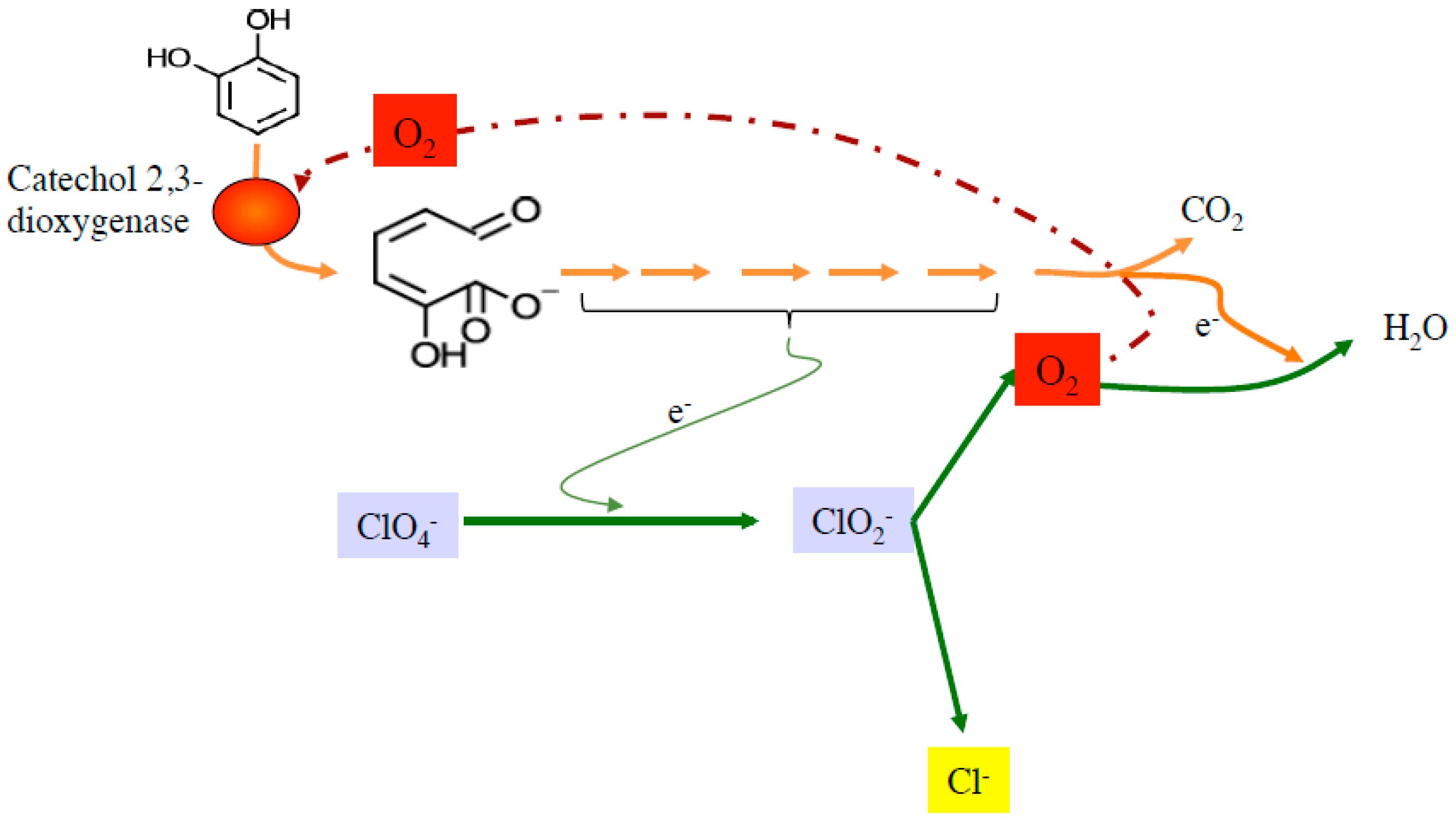 mechanical fuel n14 wiring diagram n14 oil diagram wiring