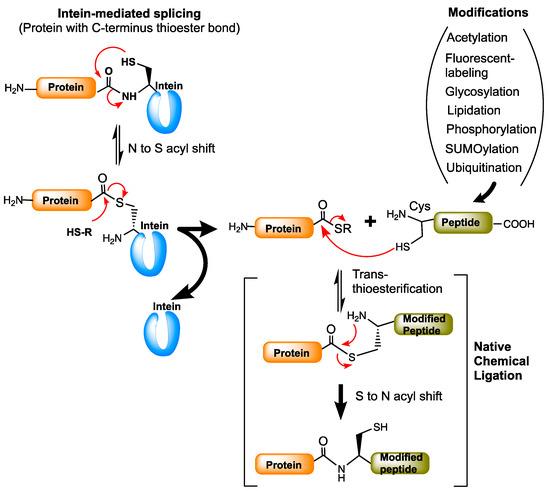 expressed protein ligation