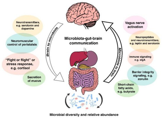 Microorganisms Special Issue Microbiome Gut Brain Axis