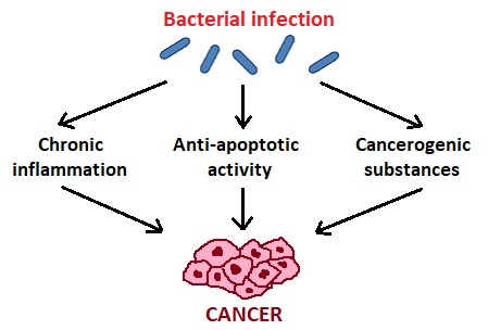 Microorganisms Free Full Text Role Of Oral Microbiota In Cancer Development Html