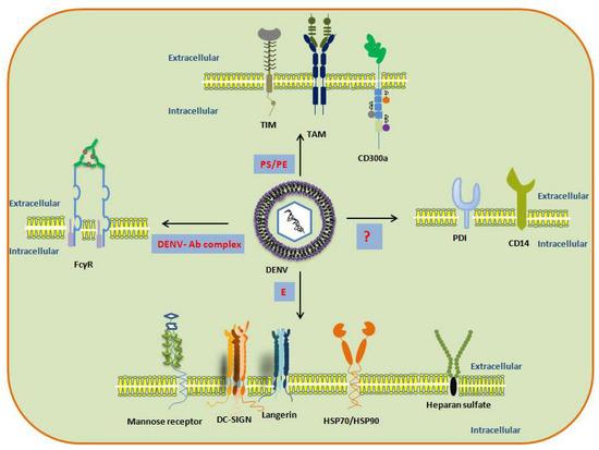 Microorganisms   An Open Access Journal from MDPI