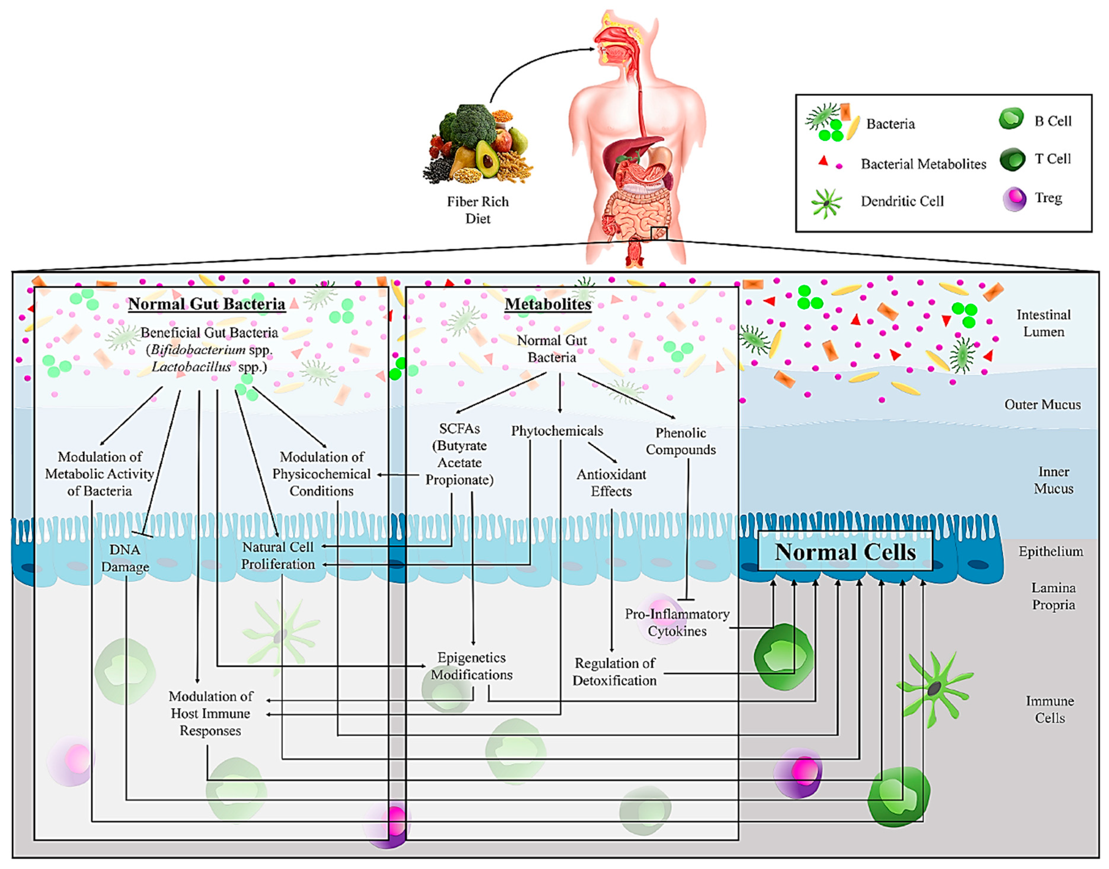 Microorganisms Free Full Text Gut Bacteria And Their Metabolites Which One Is The Defendant For Colorectal Cancer Html