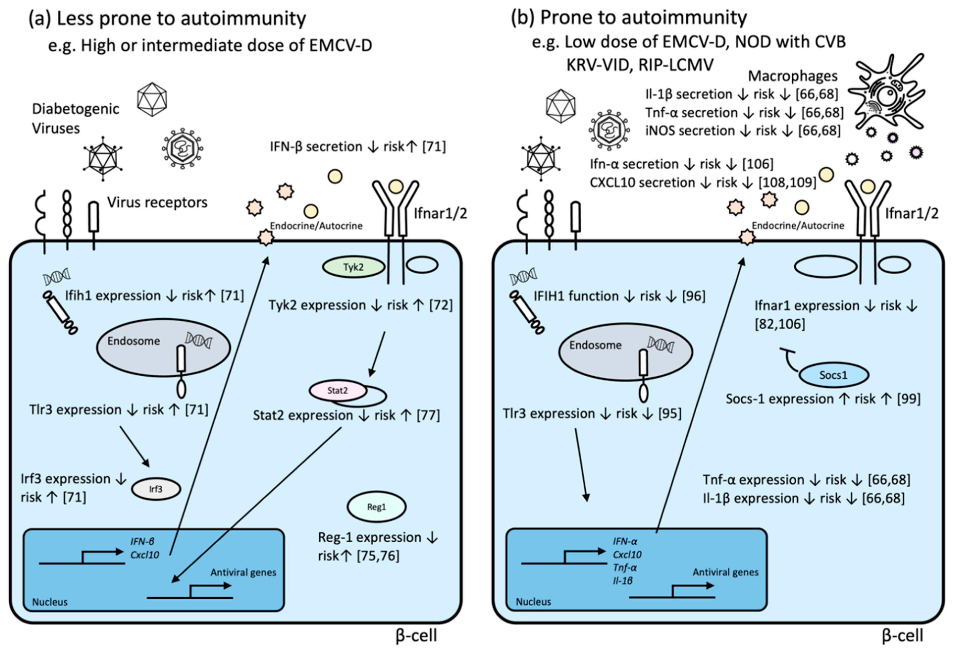 Microorganisms Free Full Text Genetic Susceptibility Of The Host In Virus Induced Diabetes Html