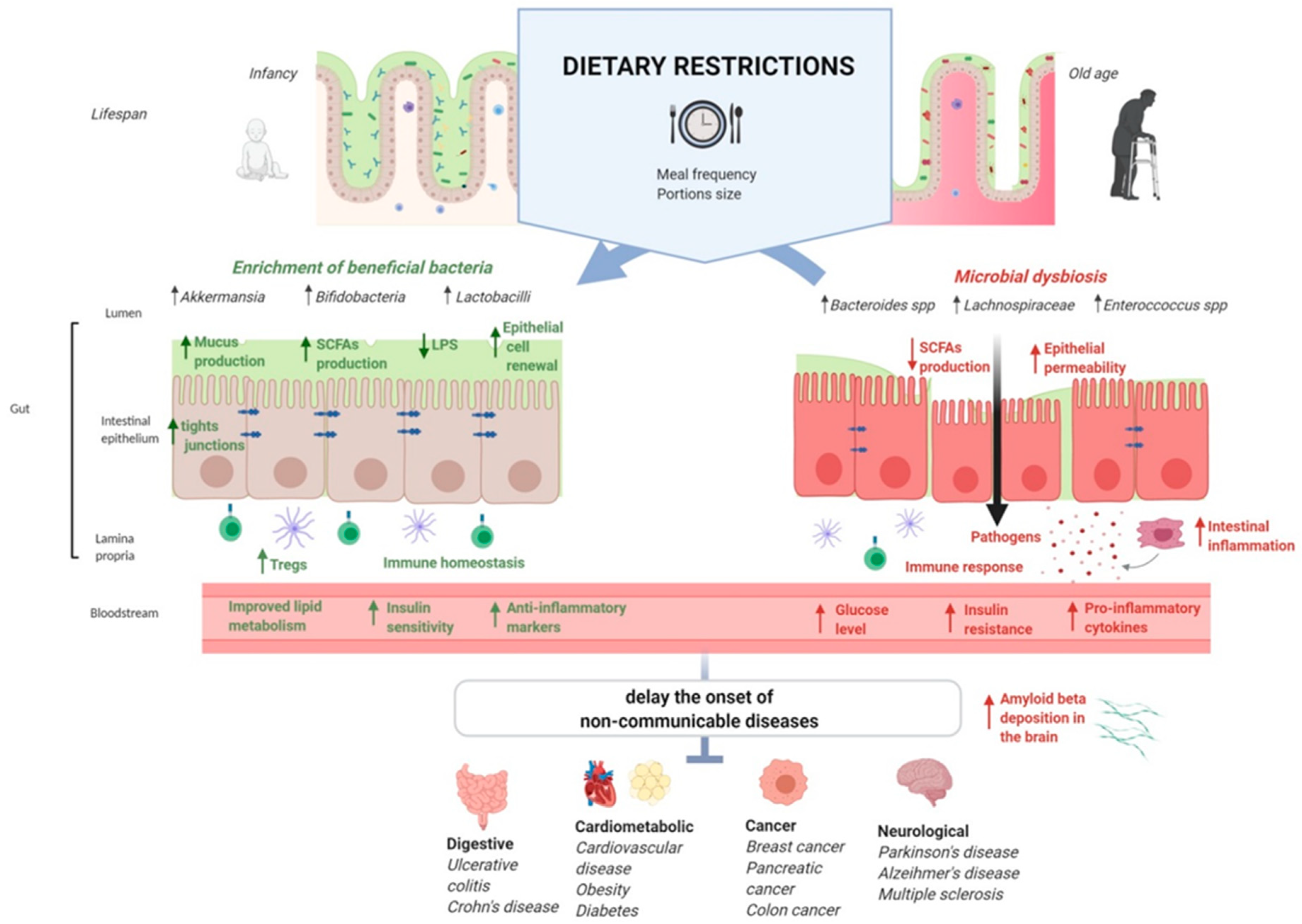 Microorganisms Free Full Text Gut Microbiota During Dietary Restrictions New Insights In Non Communicable Diseases Html