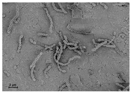 Microorganisms 08 01852 g001 550