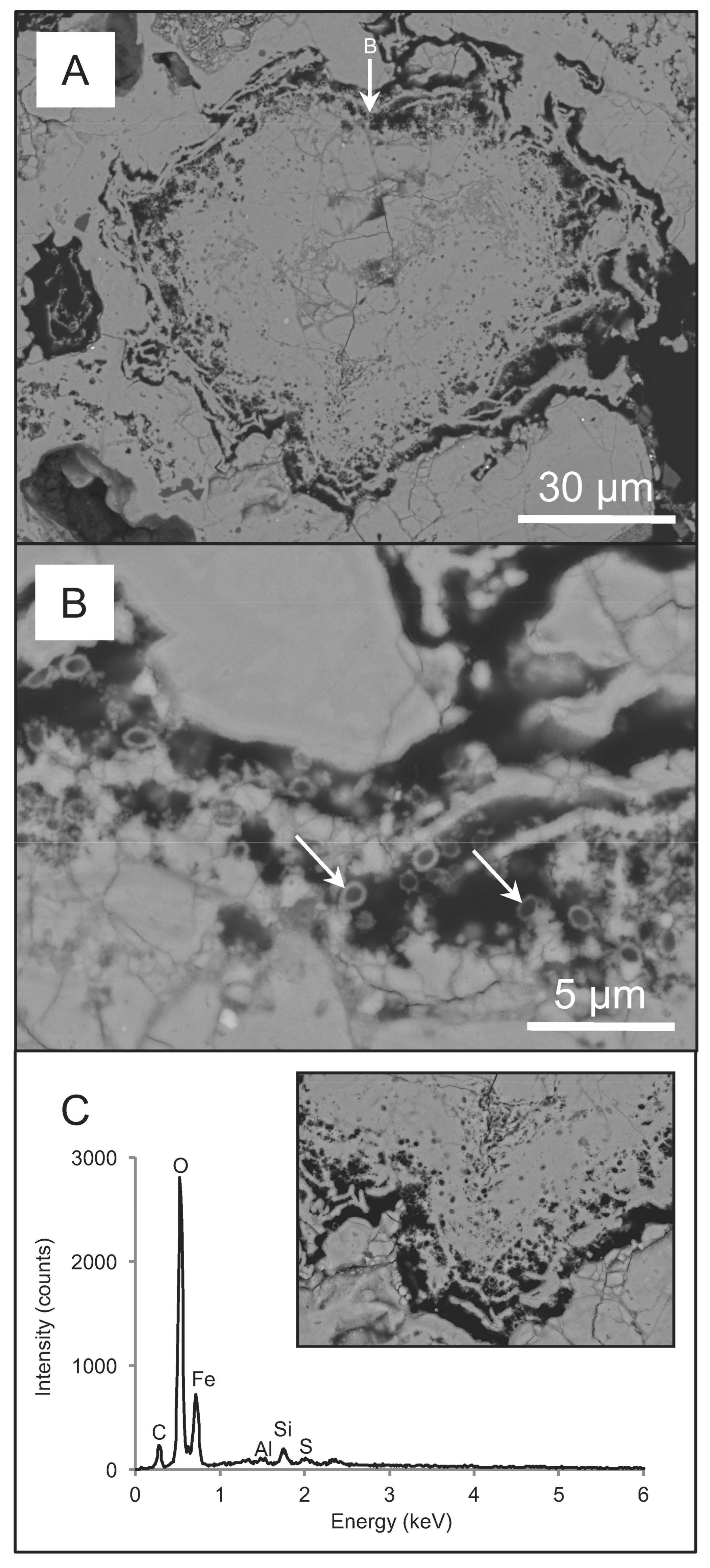 Minerals | Free Full-Text | Biogeochemical Cycling of Silver in ...