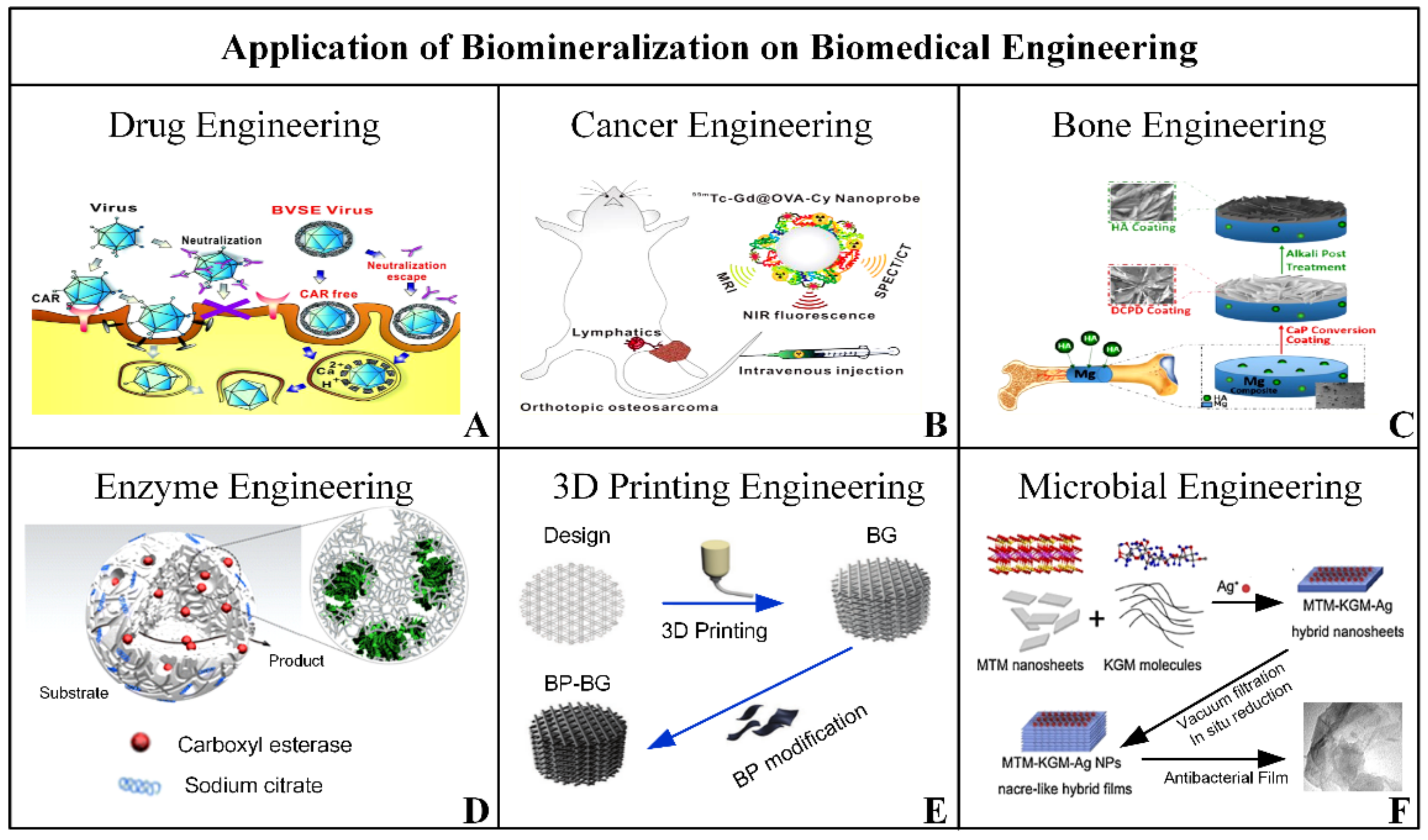 Minerals   Free Full Text   Biomineralization Forming Process and ...