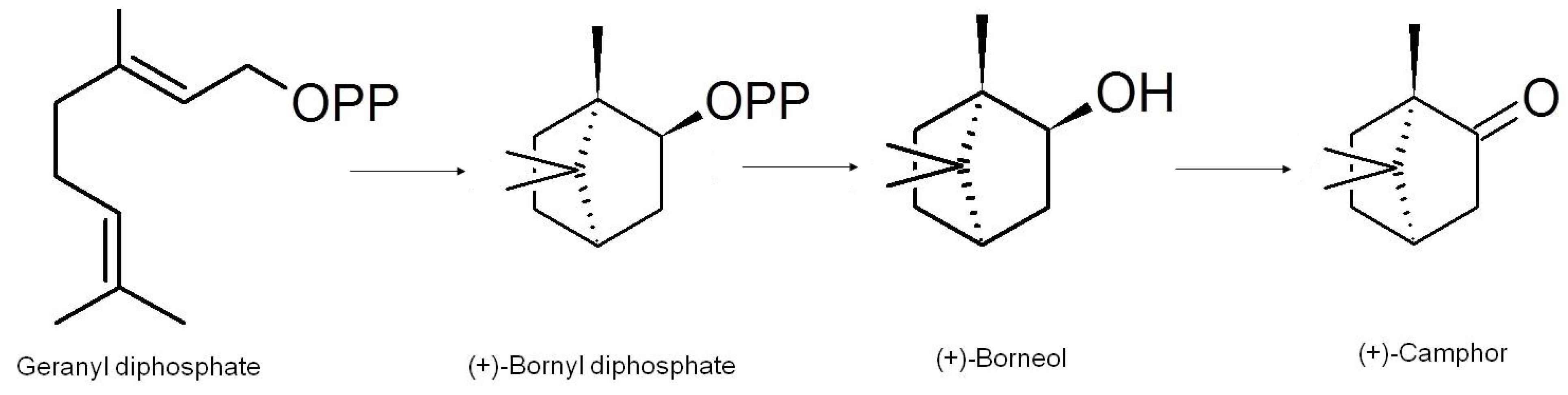 Molecules | Free Full-Text | Camphor—A Fumigant during the