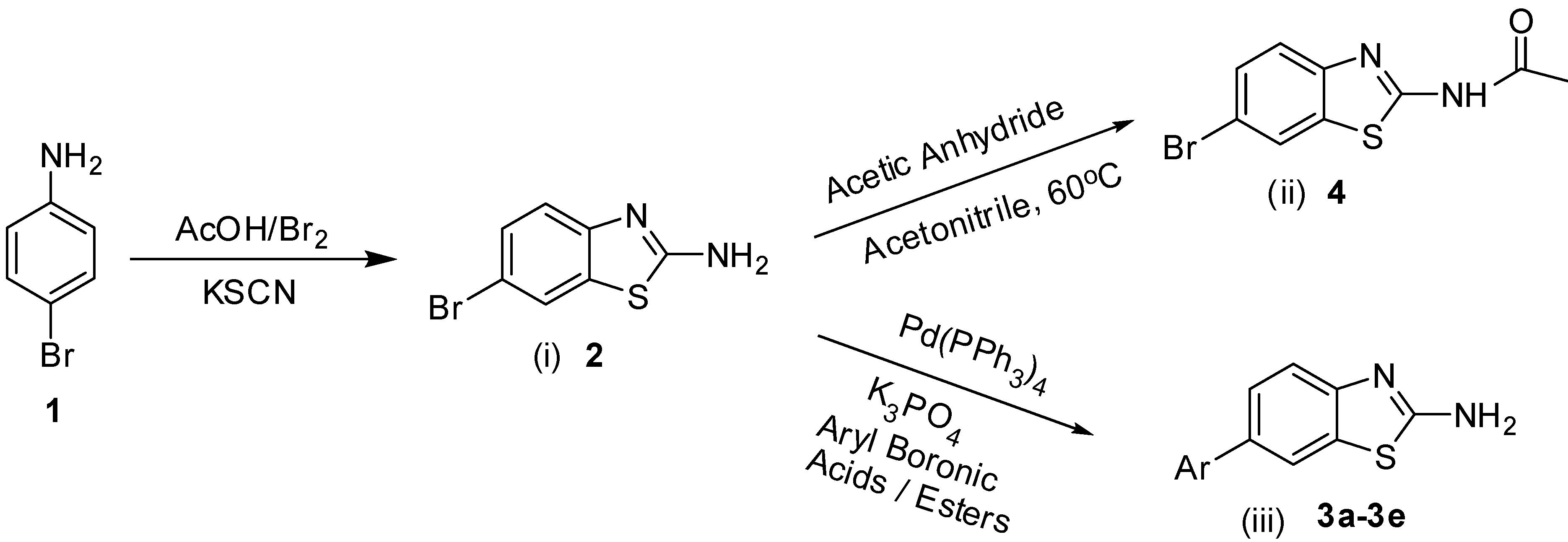 Suzuki Reaction Drug Synthesis