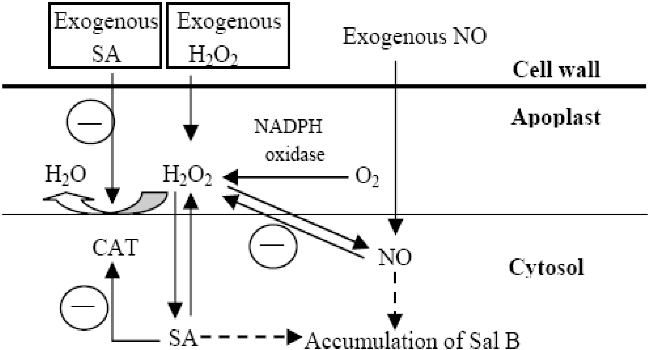 Molecules Free Full Text Hydrogen Peroxide And Nitric Oxide Are Process Flow Diagram Salicylic Acid 19 05913 G006