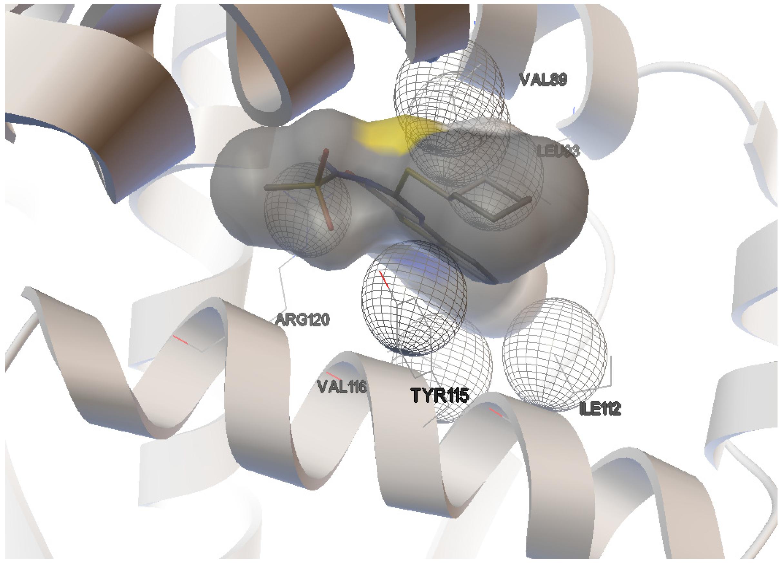 thesis molecular docking