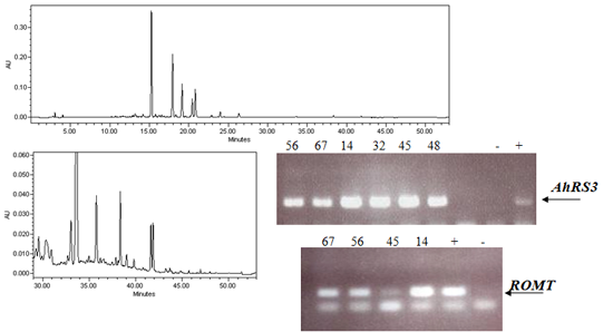 Molecules   June 2014 - Browse Articles
