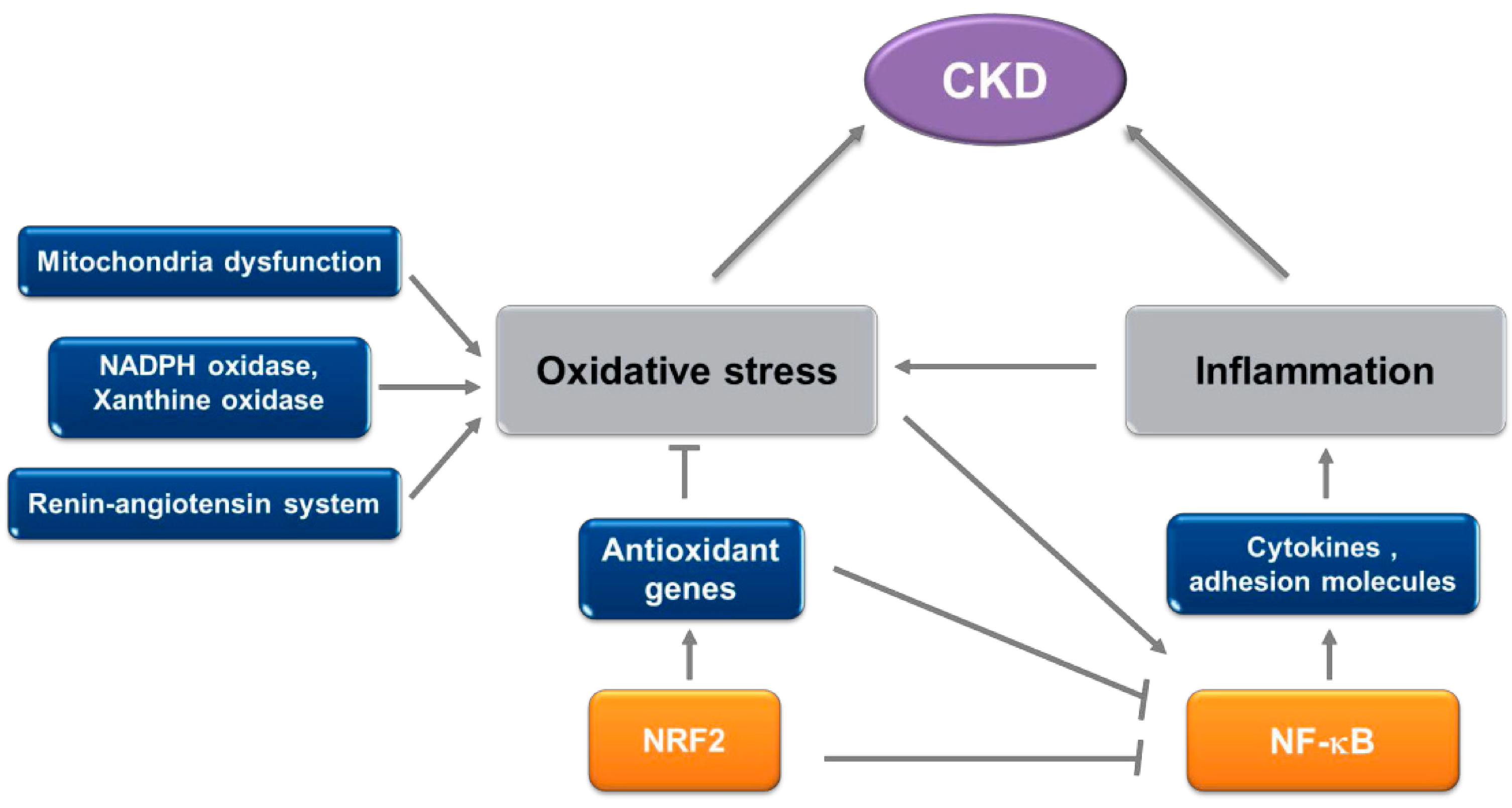Molecules Free Full Text Effect Of Redox Modulating Nrf2