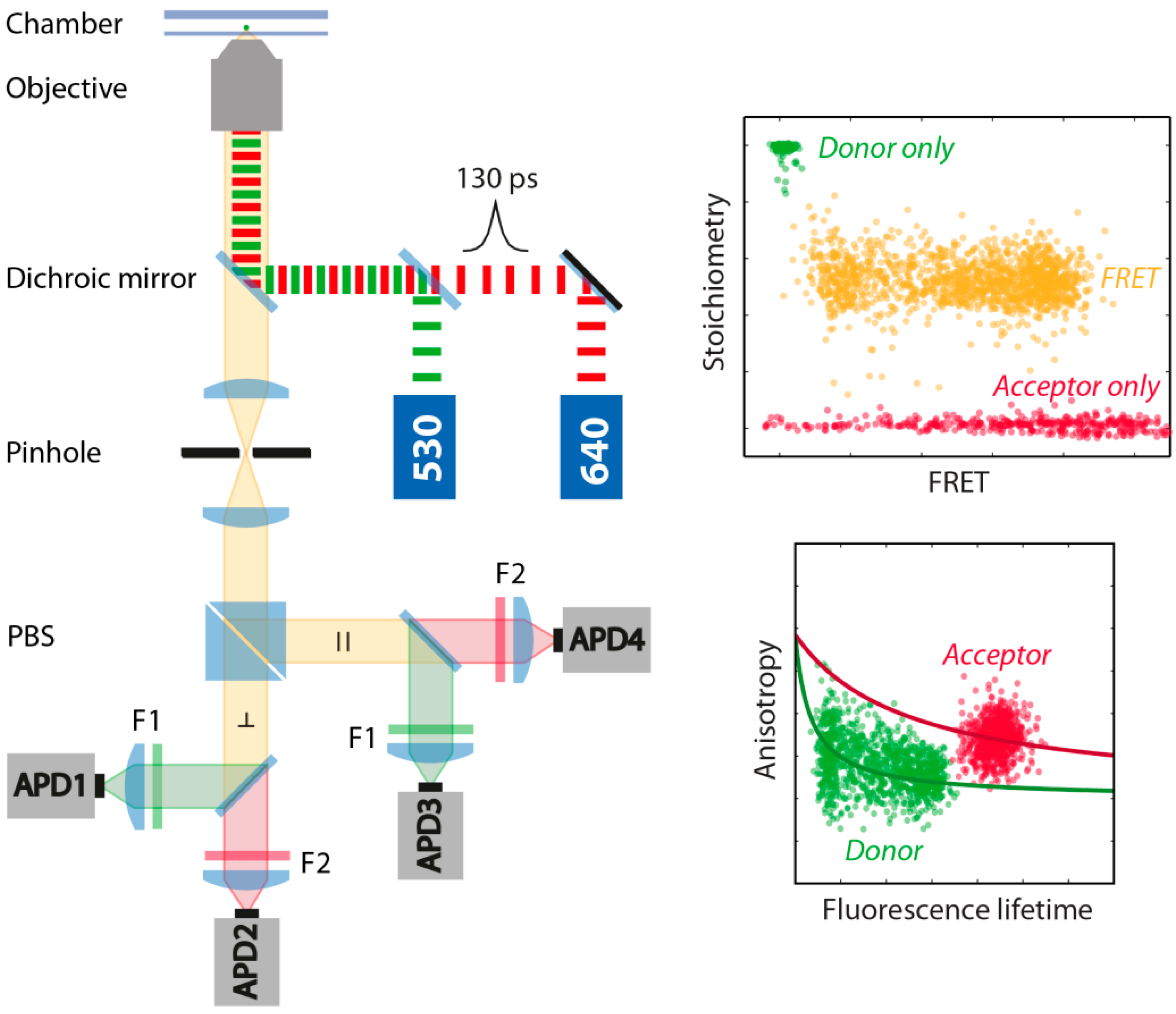 Molecules Free Full Text Different Fluorophore