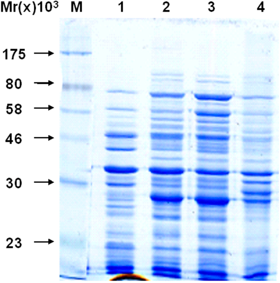 protein semisynthesis and expressed protein ligation Expressed protein ligation, a novel method for studying protein-protein interactions in transcription - download as pdf file (pdf), text file (txt) or read online.