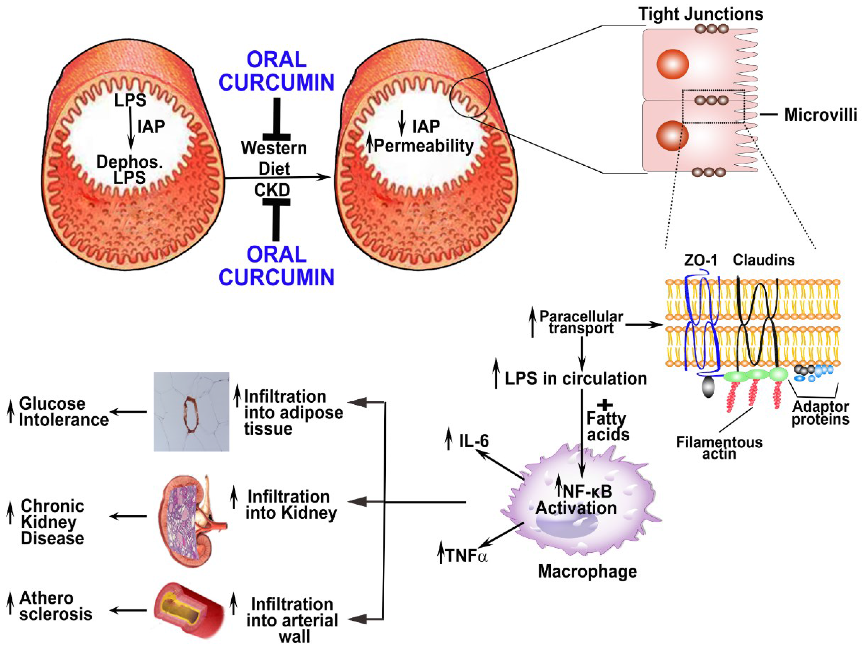 article review a chronic inflammatory disease essay Journal of inflammation will consider for publication all forms of original research articles, reviews, commentaries, hypothesis, meeting abstracts (by special arrangement) and comments on all aspects of inflammation.