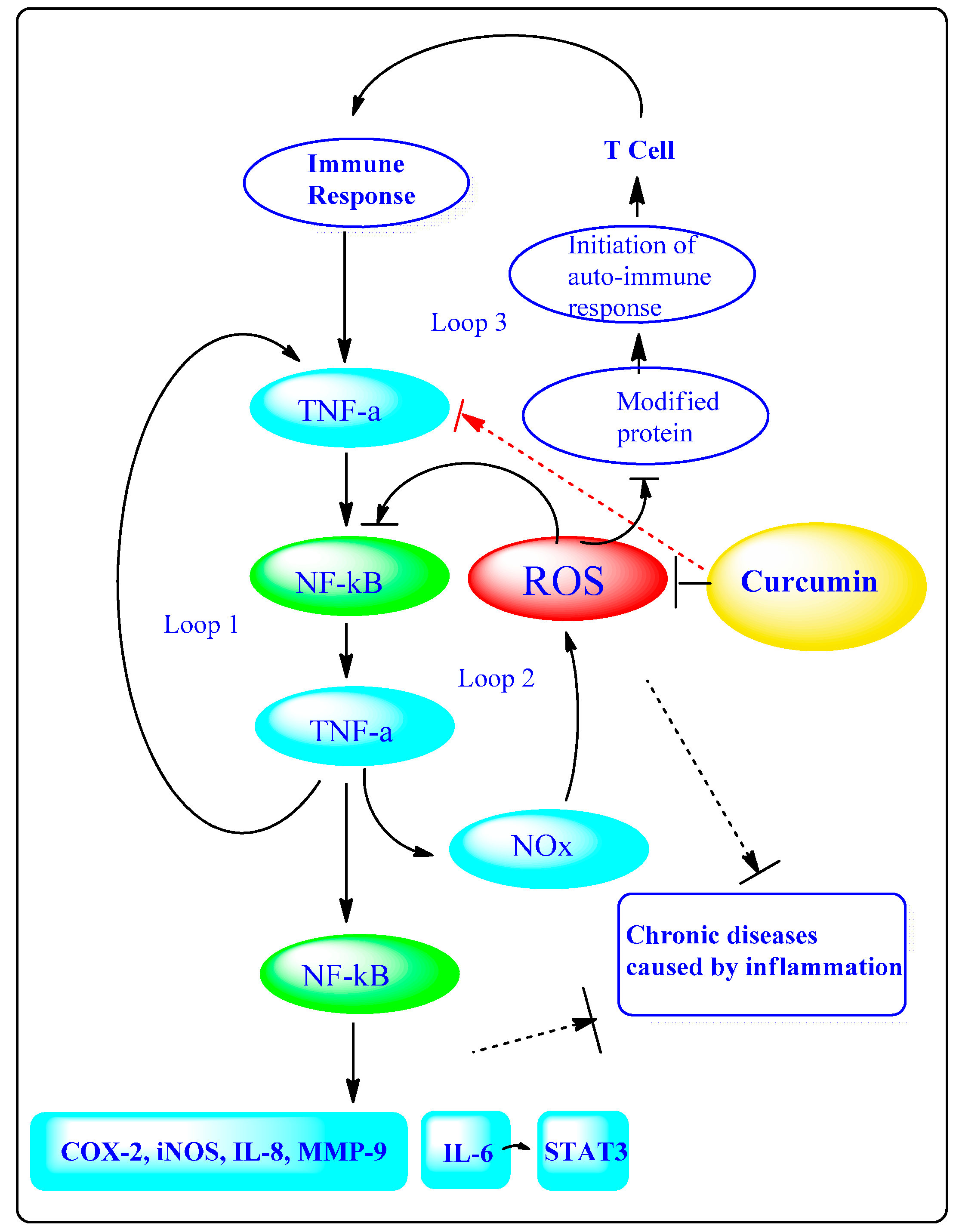 Molecules | Free Full-Text | Curcumin, Inflammation, and