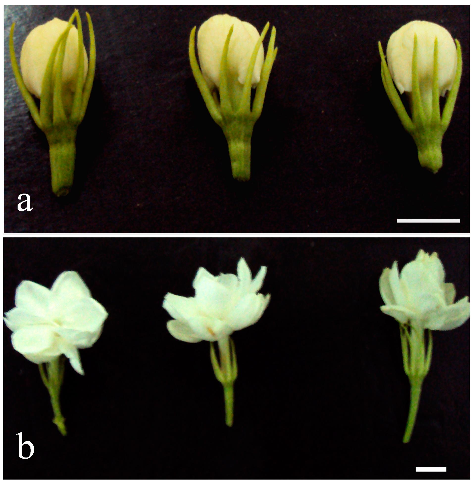 Molecules free full text transcriptomic analysis of flower molecules 20 10734 g001 izmirmasajfo