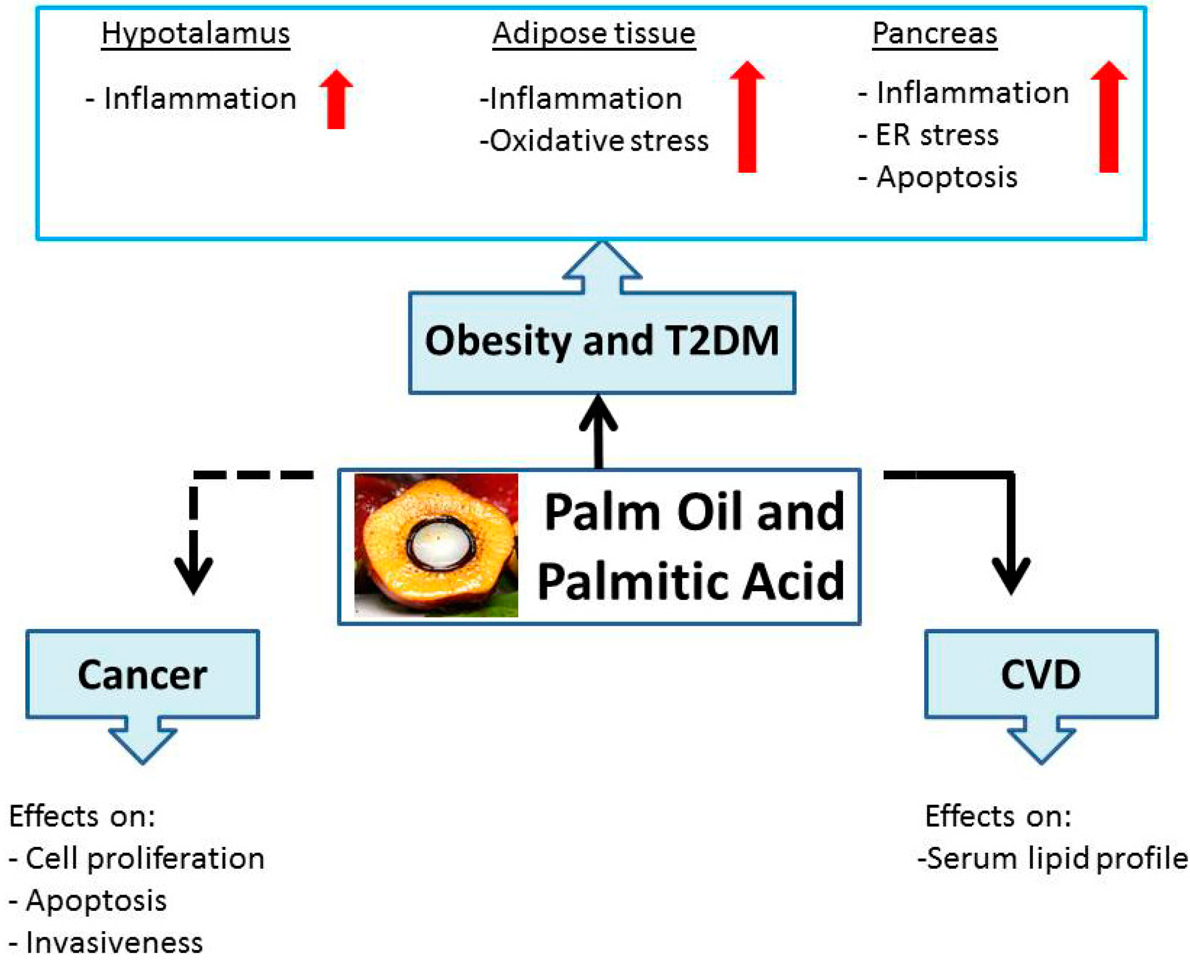 consequences of inflammation