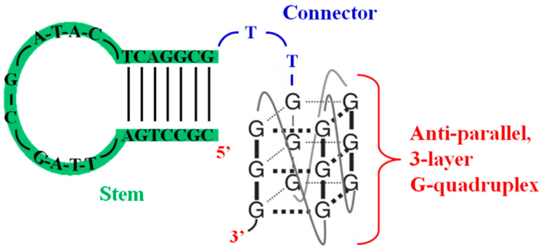 Molecules | Free Full-Text | G-Quadruplex Forming