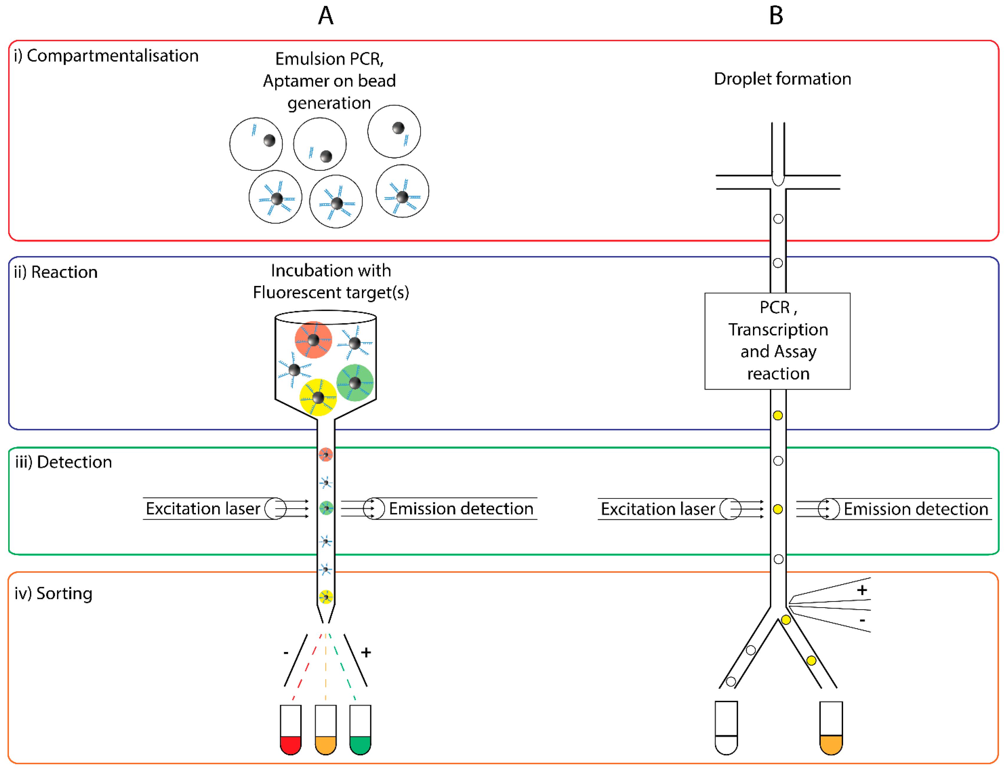 Molecules | Free Full-Text | Oligonucleotide Functionalised