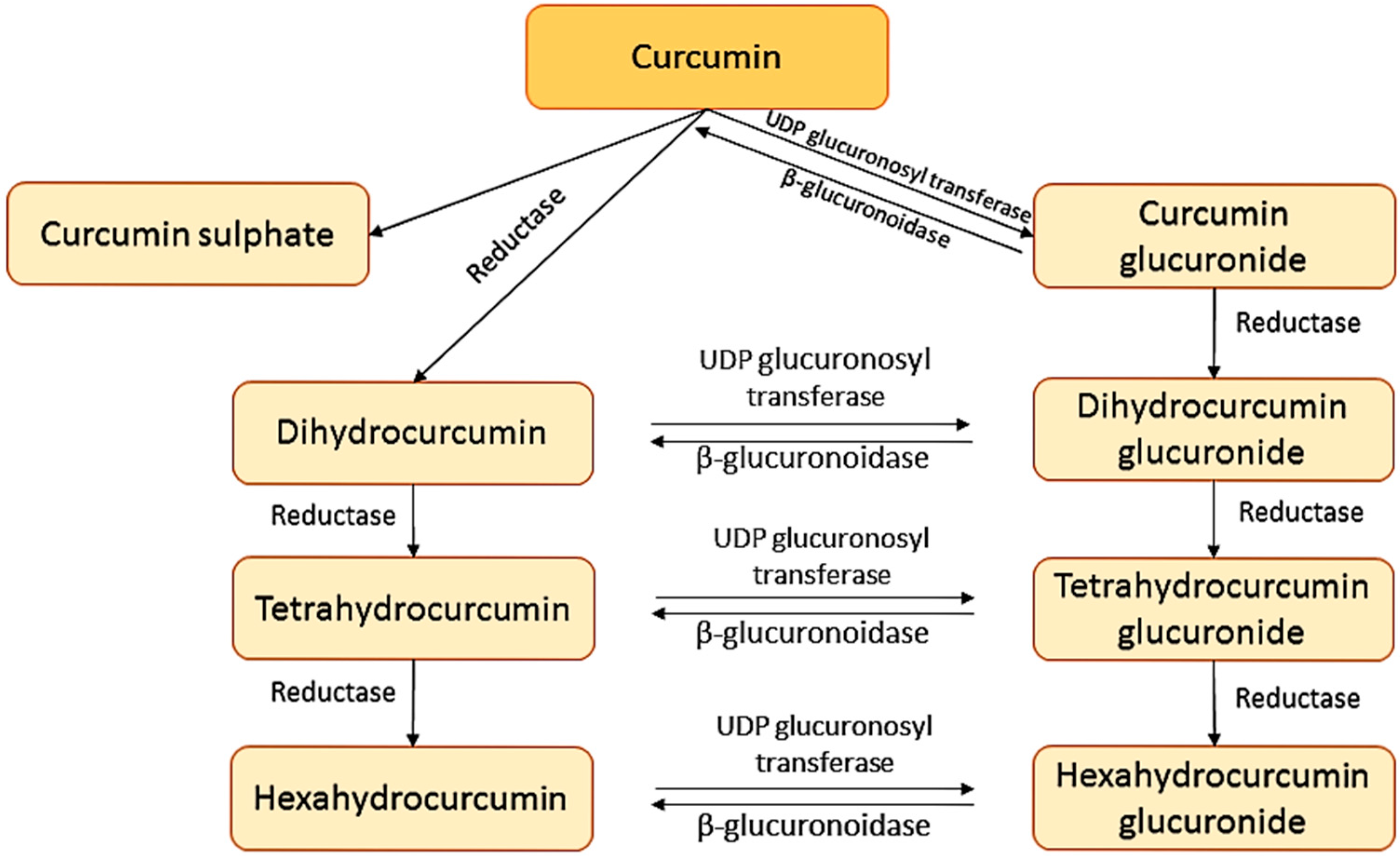 Molecules | Free Full-Text | Curcumin and Health | HTML