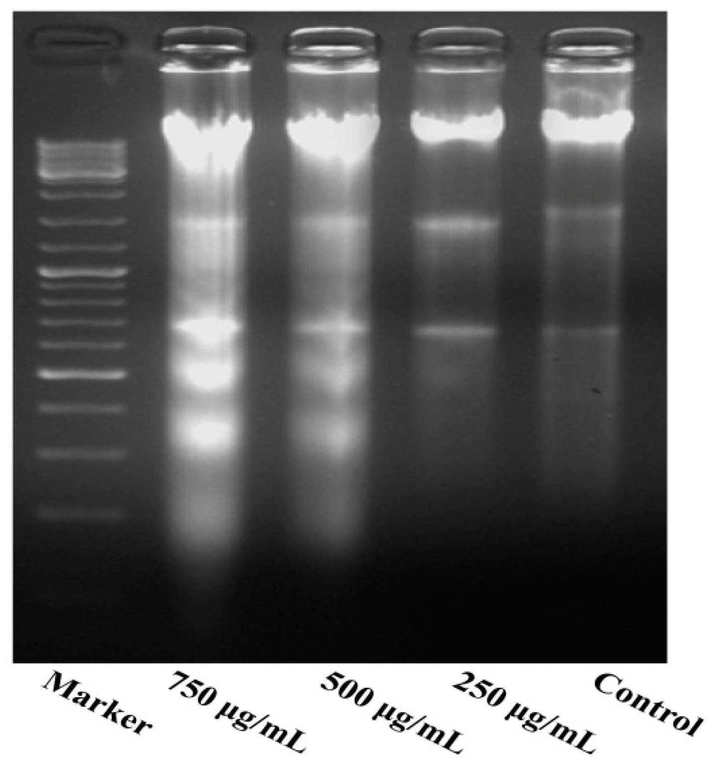 Molecules Free Full Text Methanolic Extract Of Pien Tze Huang Zhang Zhou 21 00283 G005