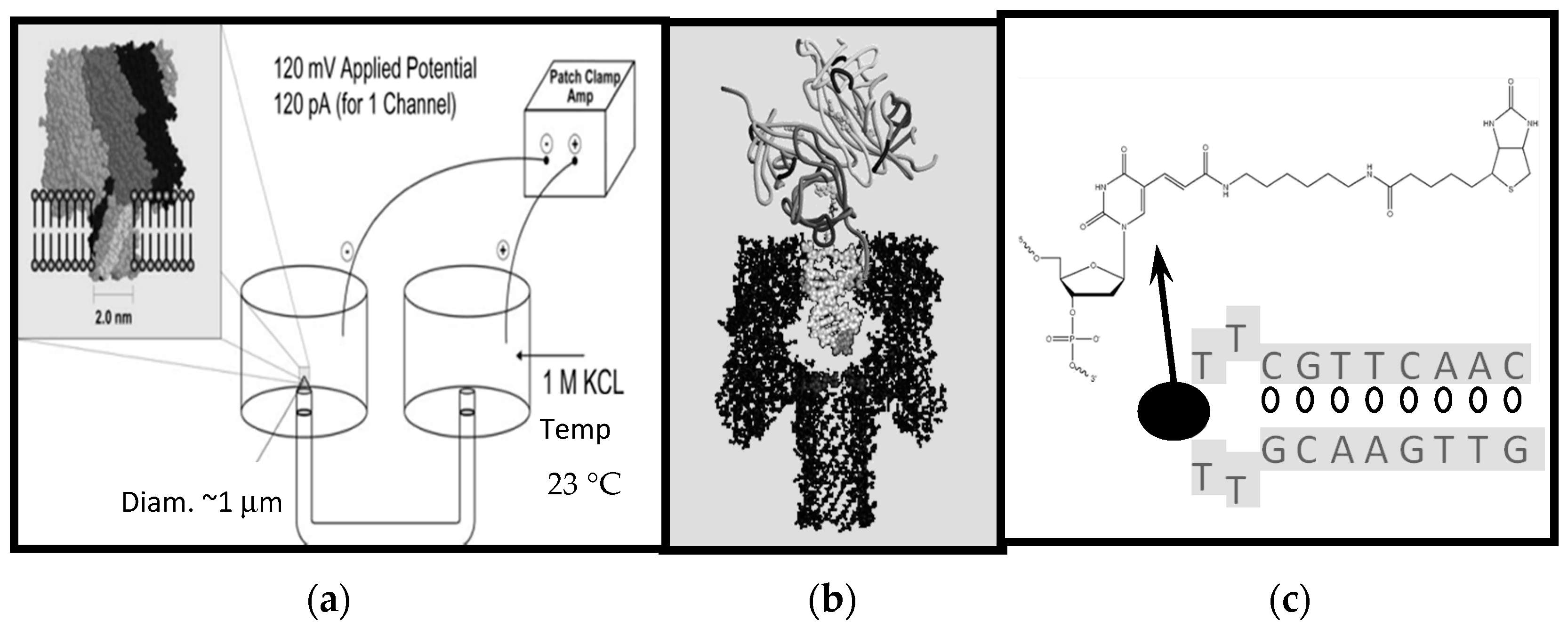 Molecules Free Full Text Nanopore Event Transduction Signal Circuit Medic 2013110 Base Board Repair Kit 21 00346 G001