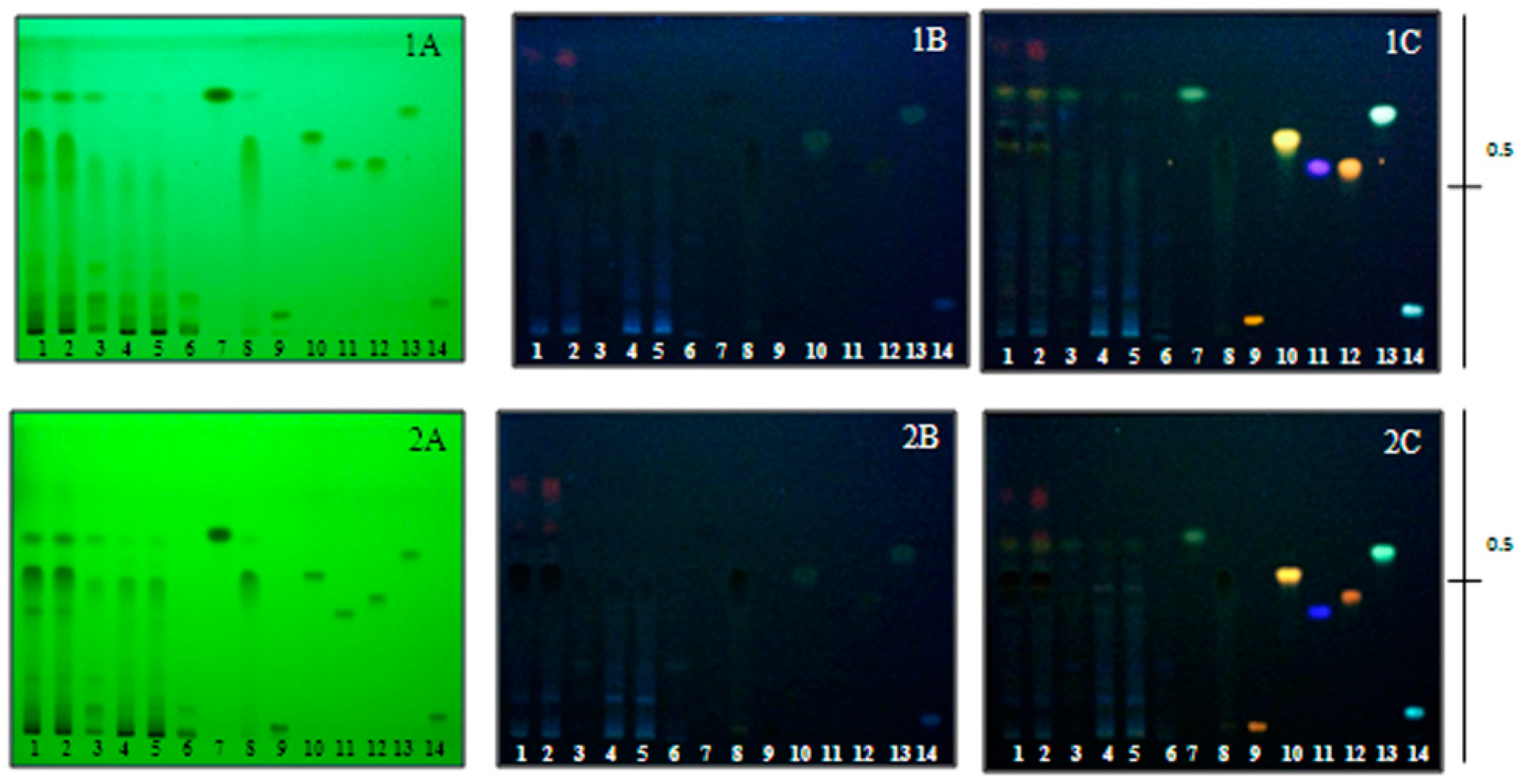 phytochemical analysis of abutilon indicum Powdered abutilon indicum leaves were extracted from chloroform thin layer chromatography technique in combination with column chromatography was used to separate the chemically active constituents the constituents were subjected to ir, nmr, eims analysis to identify the compounds contained in.