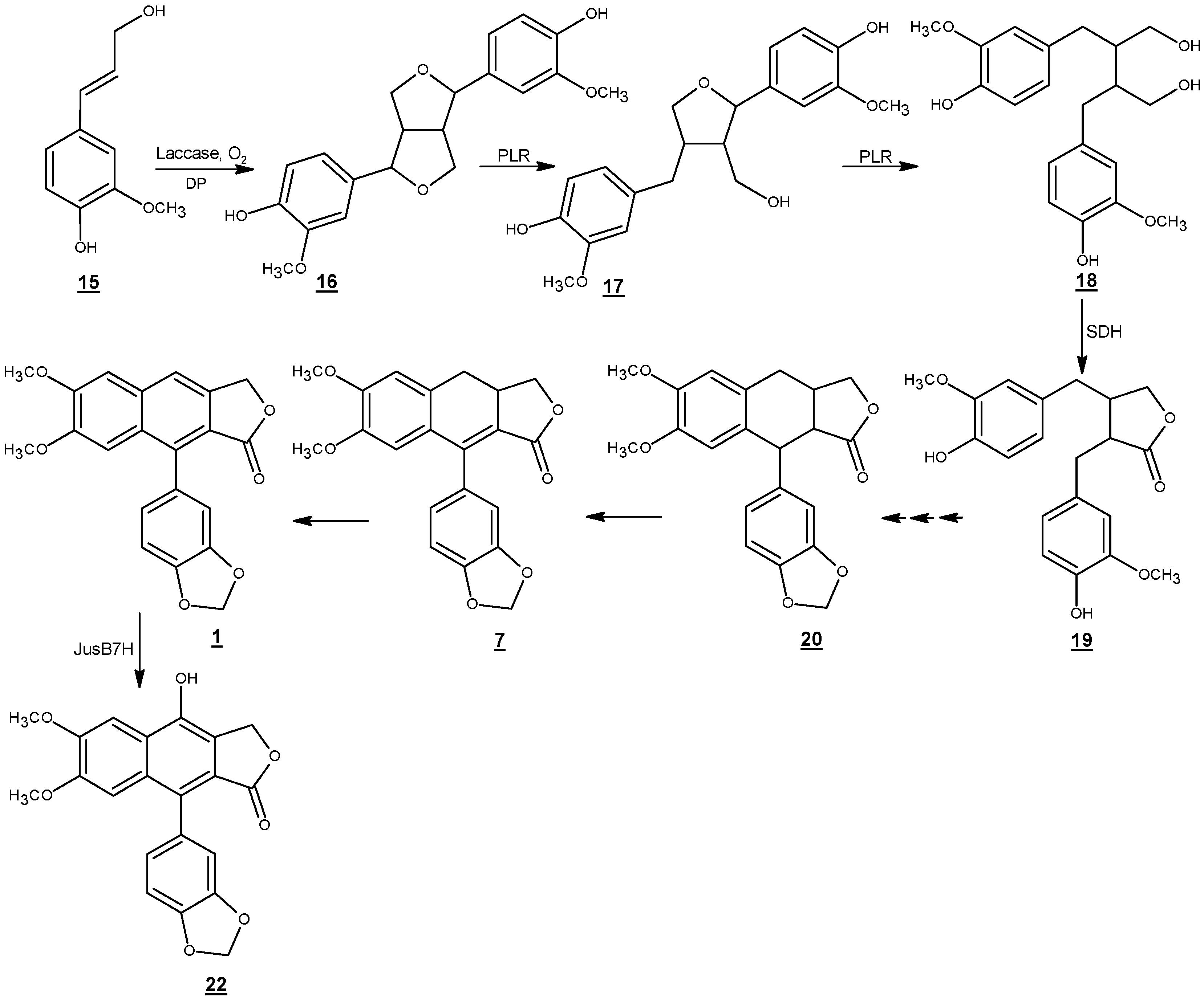 Molecules | Free Full-Text | Justicidin B: A Promising