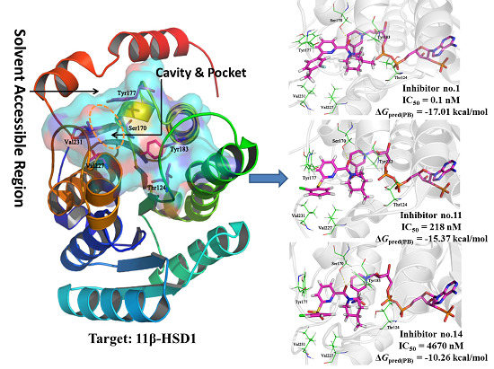 Molecular Modeling Studies of 11β-Hydroxysteroid Dehydrogenase Type 1 Inhibitors through Receptor-Based 3D-QSAR and Molecular Dynamics Simulations