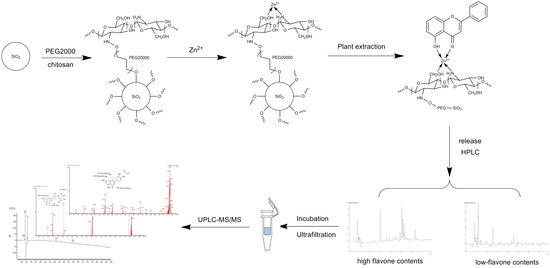 Screening of Potential Xanthine Oxidase Inhibitors in Gnaphalium hypoleucum DC. by Immobilized Metal Affinity Chromatography and Ultrafiltration-Ultra Performance Liquid Chromatography-Mass Spectrometry