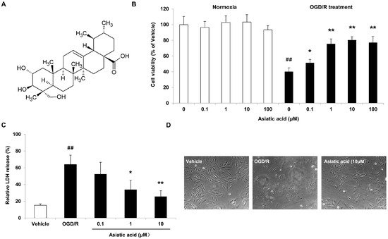 Asiatic Acid Attenuates Myocardial Ischemia-Reperfusion Injury via Akt-GSK-3β-HIF-1α Signaling in Rat H9c2 Cardiomyocytes