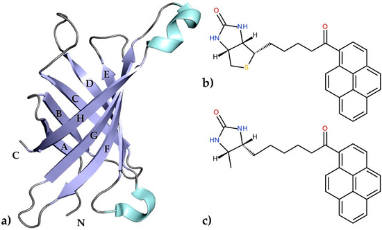 Structural Characterization of the Avidin Interactions with Fluorescent Pyrene-Conjugates: 1-Biotinylpyrene and 1-Desthiobiotinylpyrene†