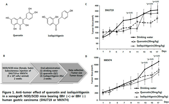 Anti-Cancer Effect of Quercetin in Xenograft Models with EBV-Associated Human Gastric Carcinoma