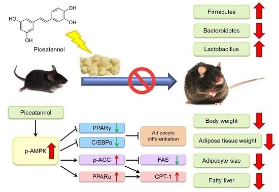 Molecules | Free Full-Text | Piceatannol Exerts Anti-Obesity Effects in C57BL/6 Mice through ...