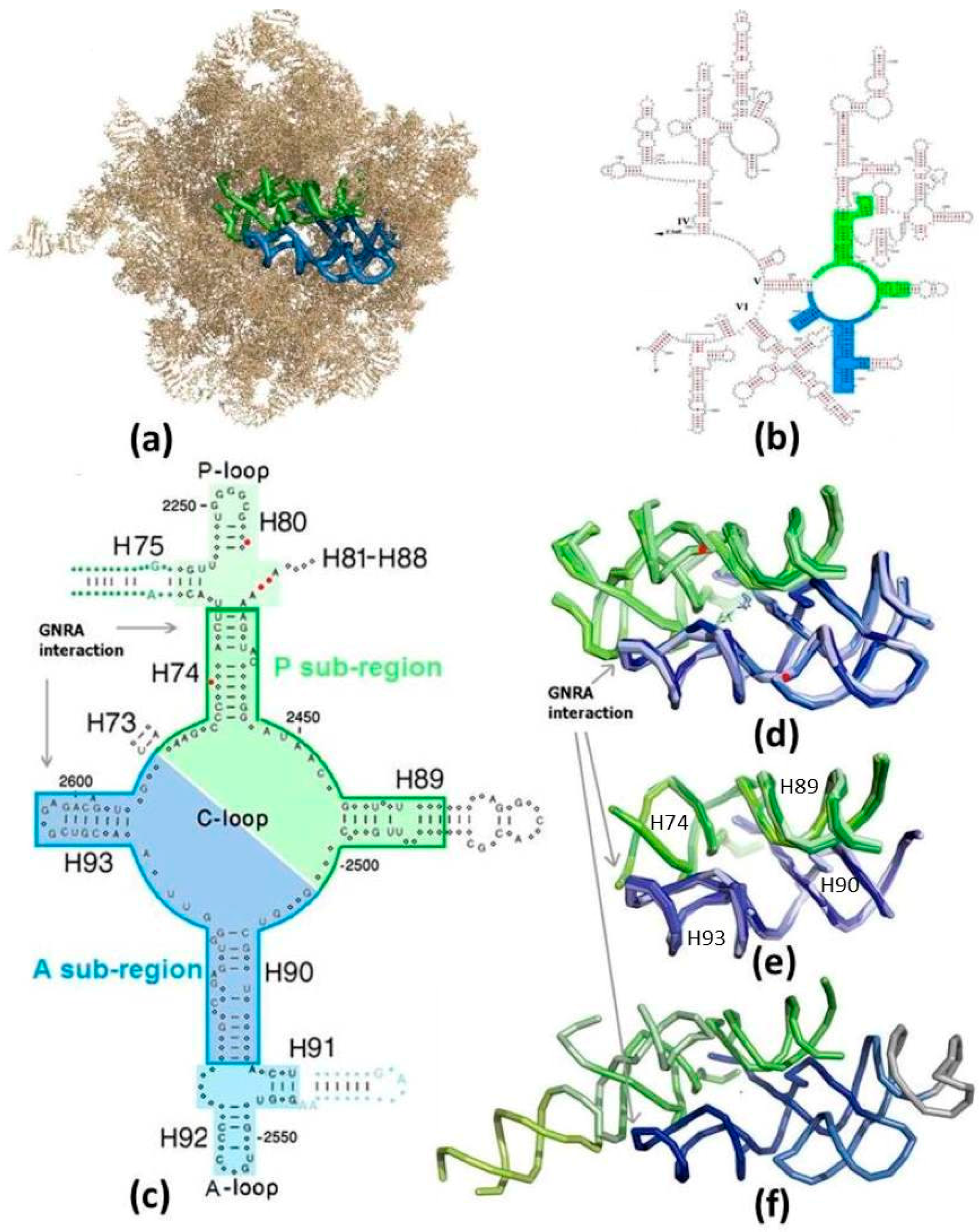 molecules 21 01701 g001 molecules free full text could a proto ribosome emerge