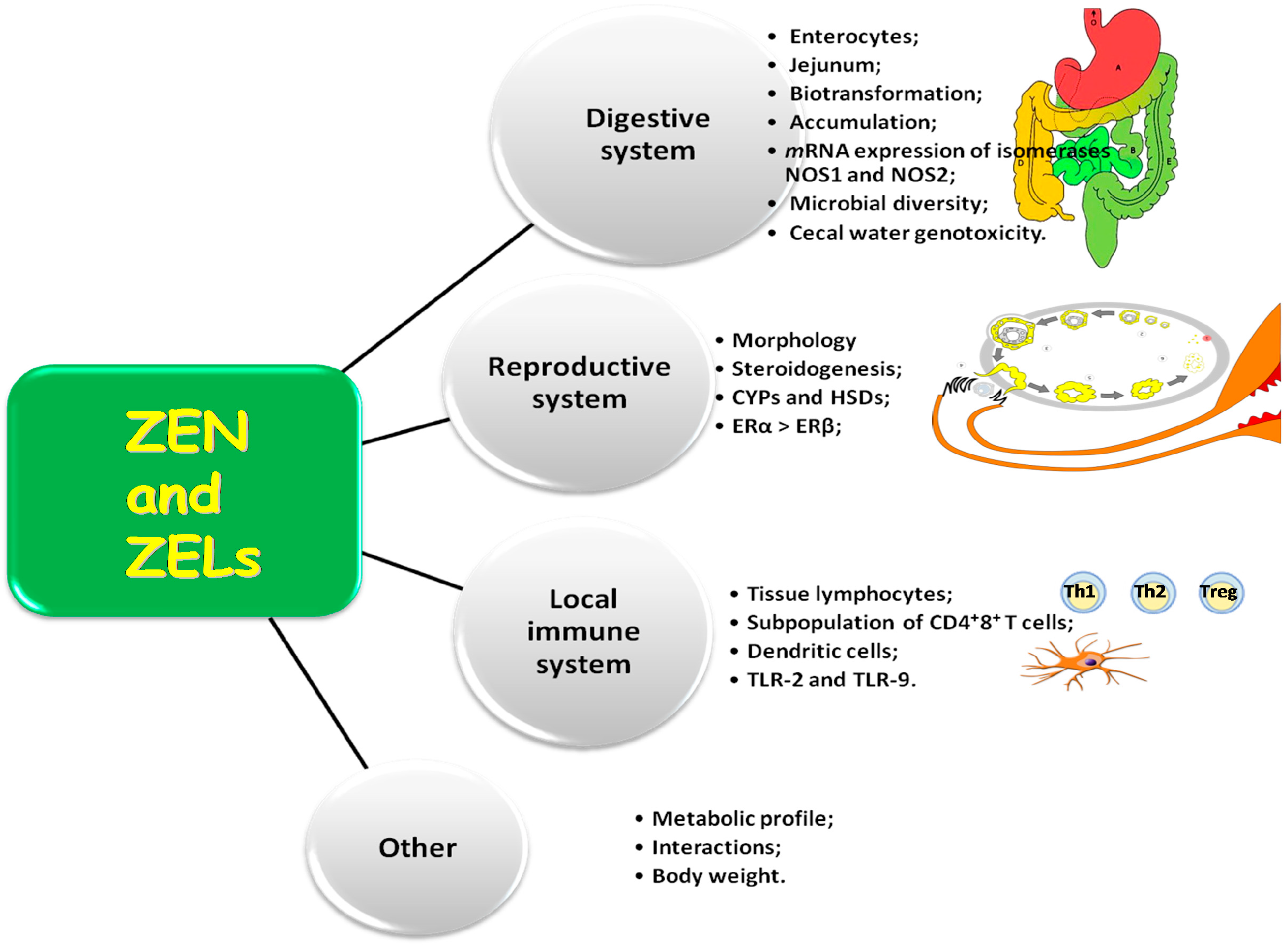 steroid hormones are produced by what metabolic precursor