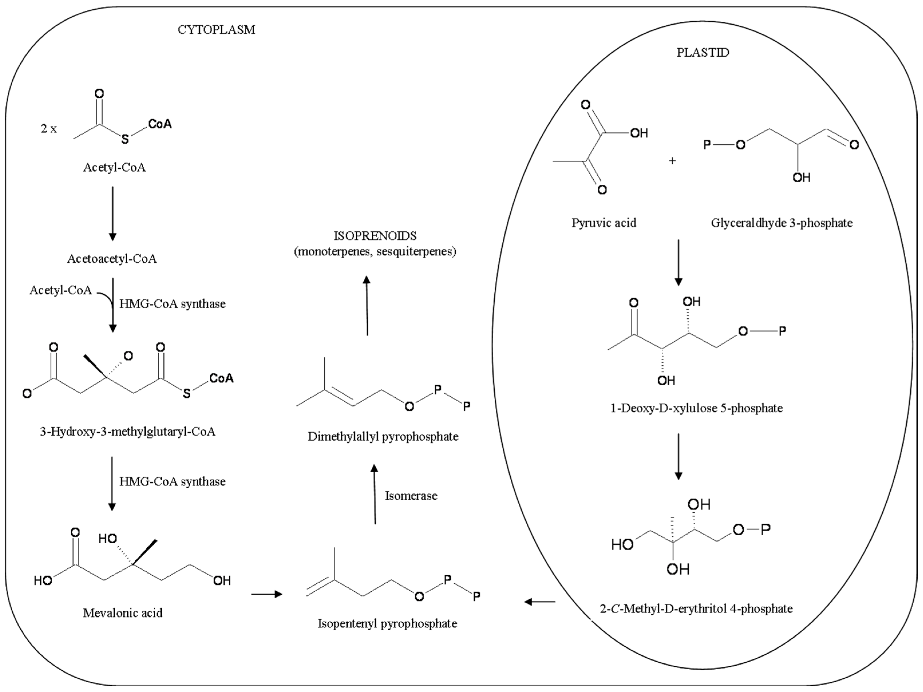 Molecules | Free Full-Text | Biological Activities of