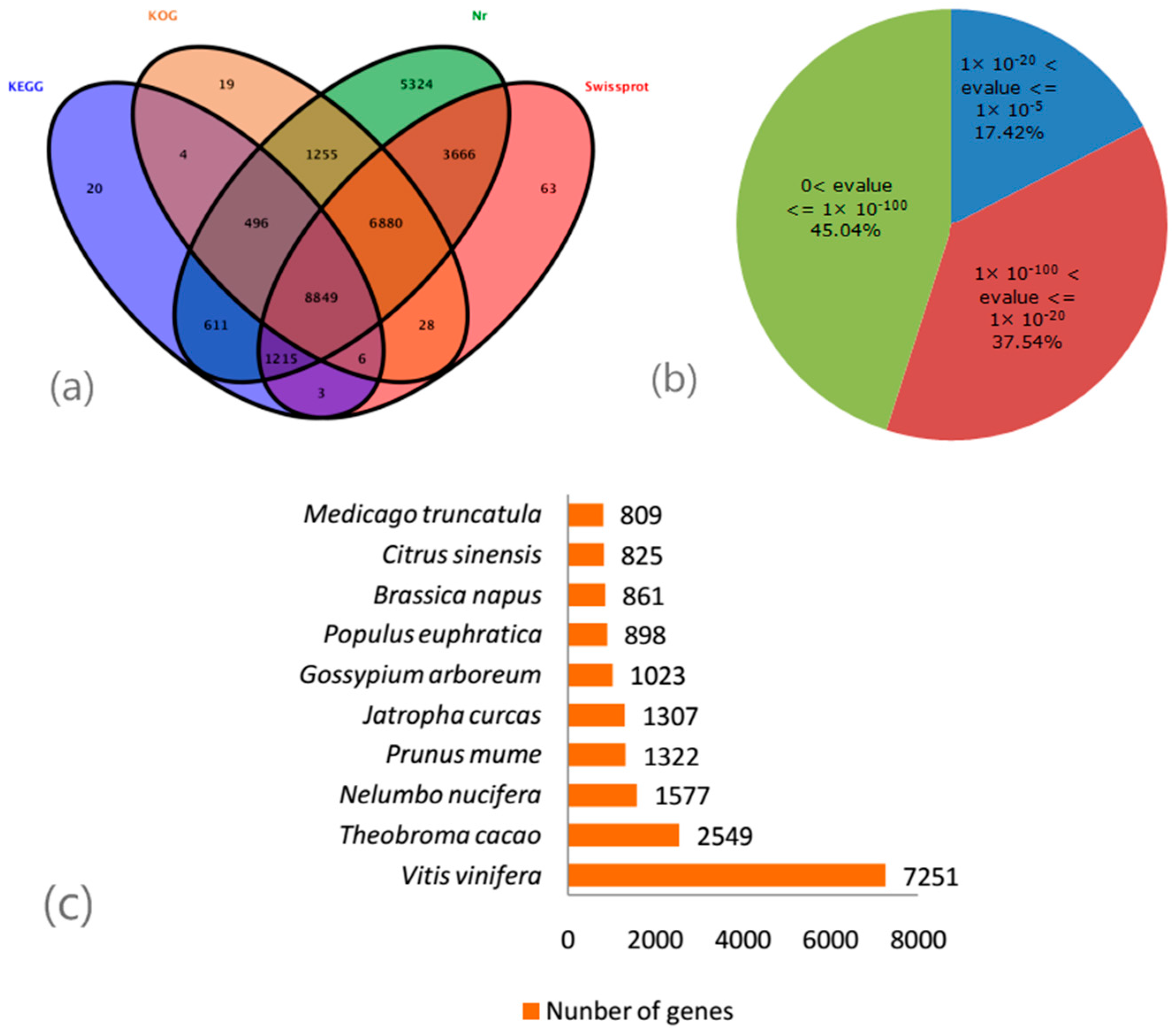 Molecules Free Full Text Transcriptomic Analysis Of Leaf In Tree What Is Annotated Diagram No