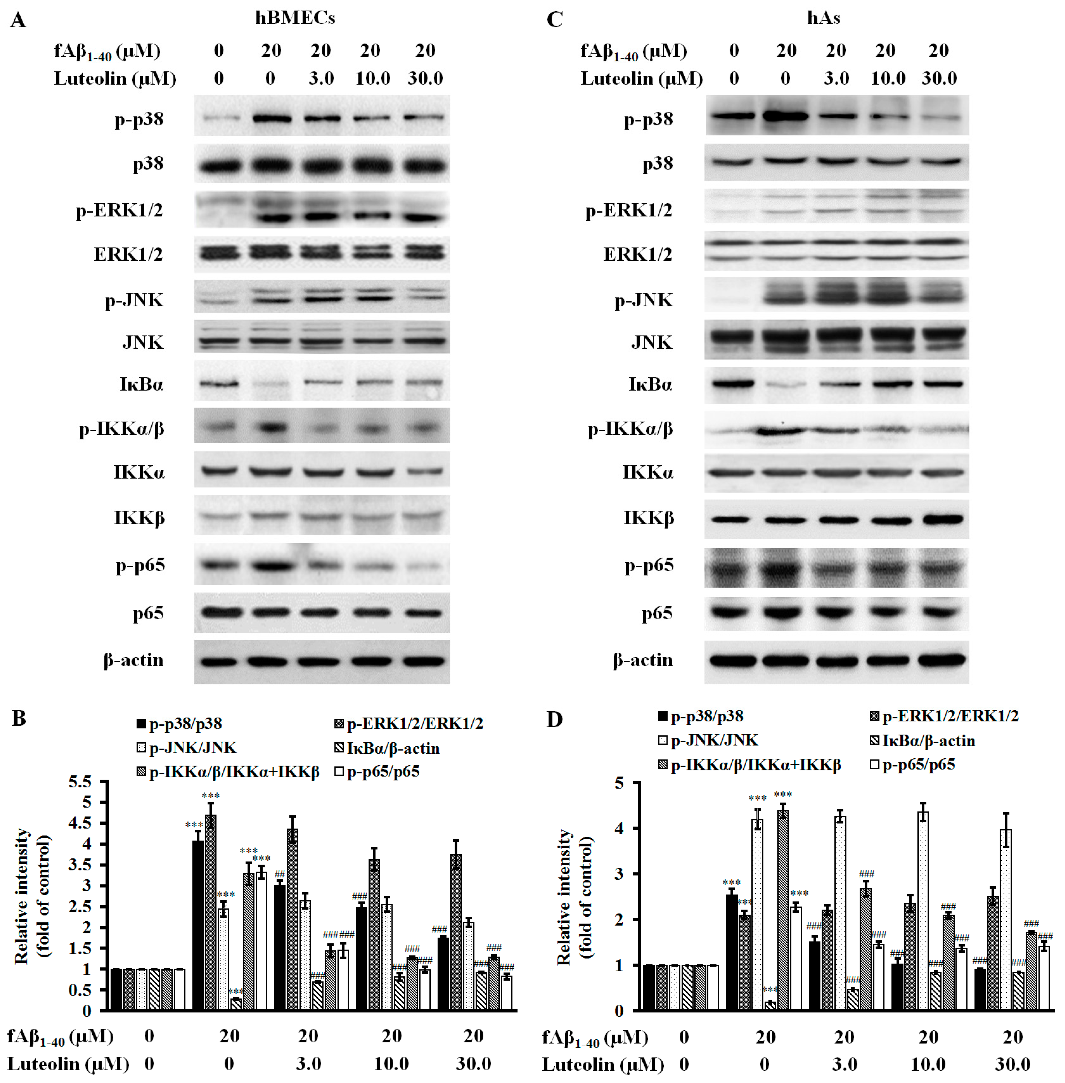 Molecules | Free Full-Text | Luteolin Inhibits Fibrillary β