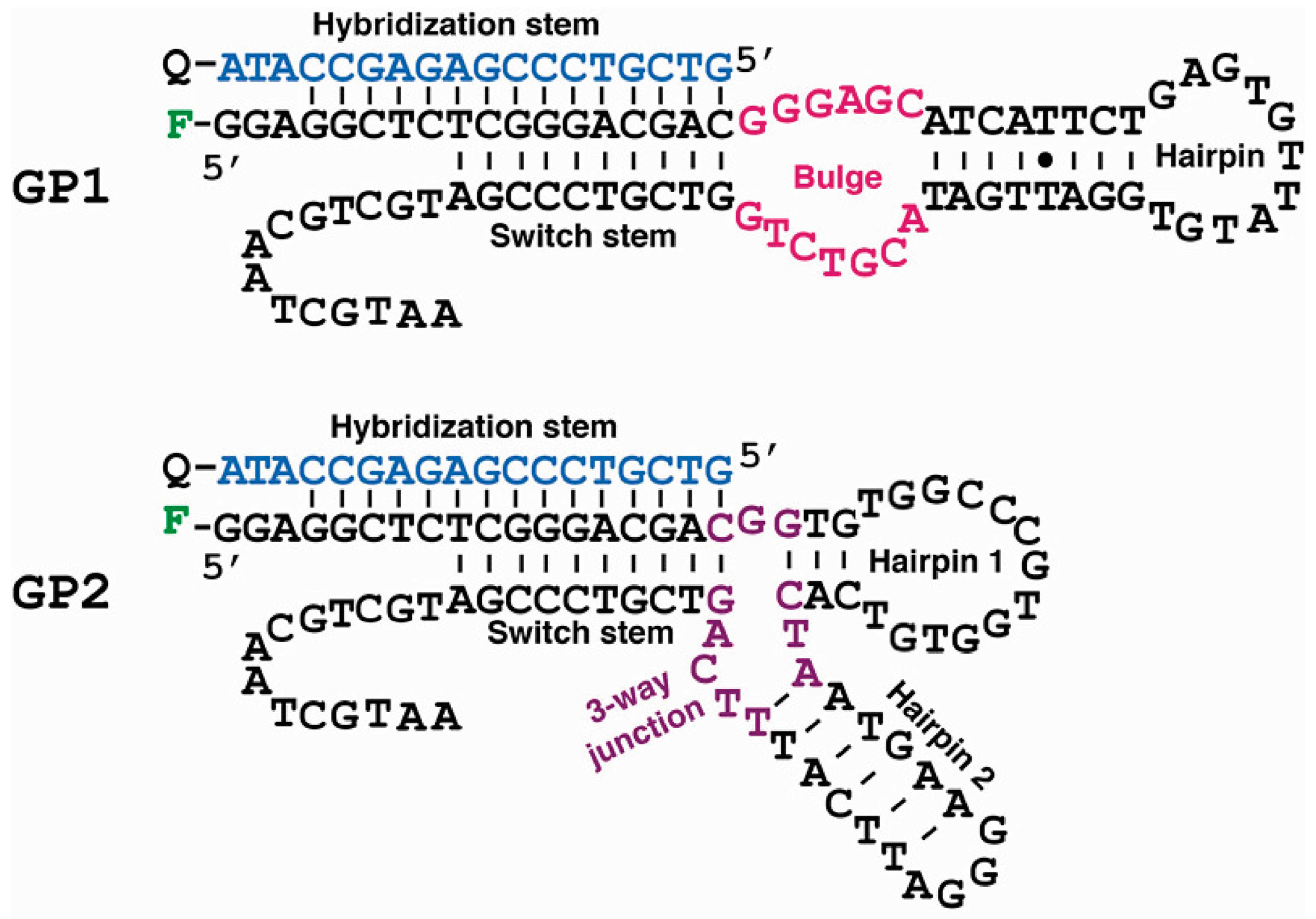 Molecules Free Full Text In Vitro Selection Of Dna Aptamers That 4 Way Switch Internal No