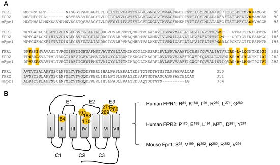 The Formyl Peptide Receptors: Diversity of Ligands and Mechanism for Recognition