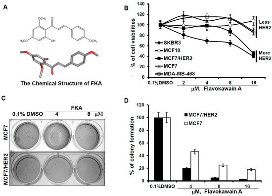 Induction of G2M Arrest by Flavokawain A, a Kava Chalcone, Increases the Responsiveness of HER2-Overexpressing Breast Cancer Cells to Herceptin