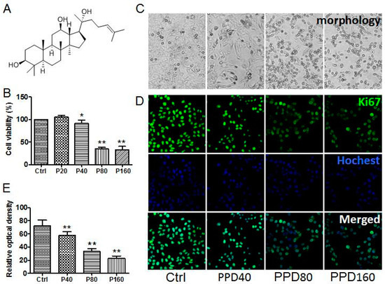 Ginsenoside PPD's Antitumor Effect via Down-Regulation of mTOR Revealed by Super-Resolution Imaging